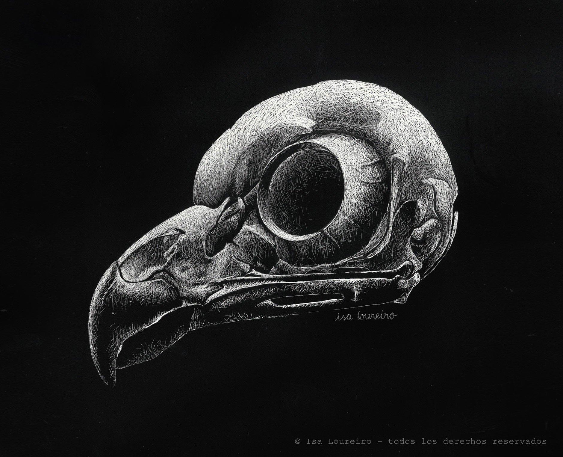 Cráneo de lechuza – Strix varia
