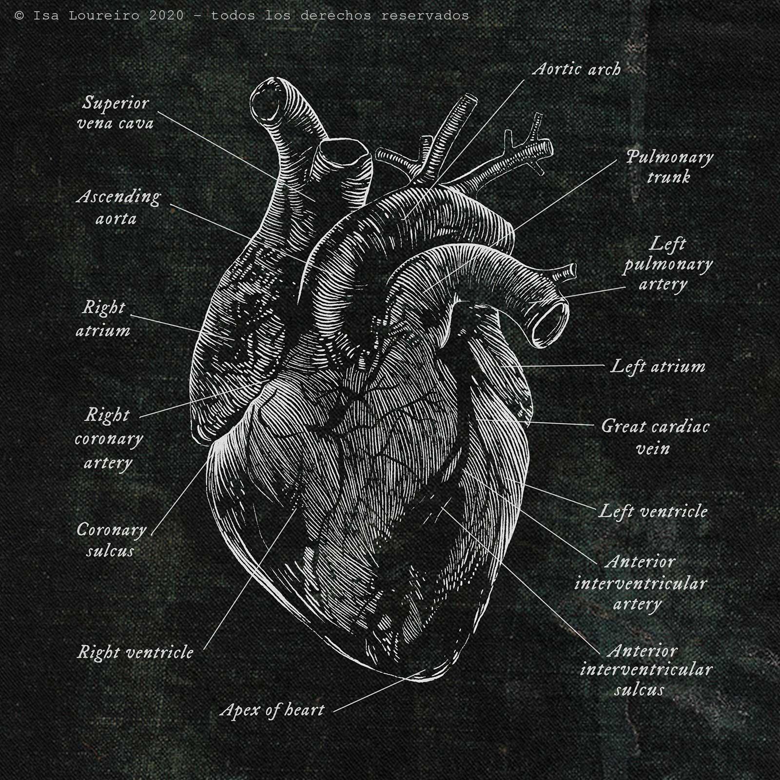 heart_white_engraving_isaloureiro